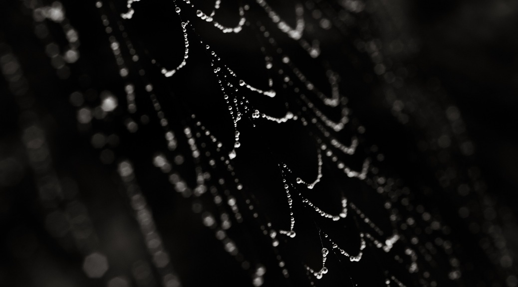 Abstract image of spider web